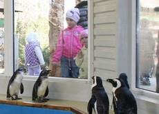 Pingvinek a jászberényi állatkertben